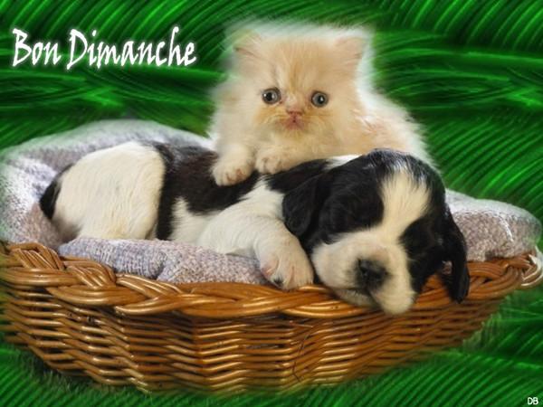 Bon Dimanche - chaton chiot : kdo pour vous