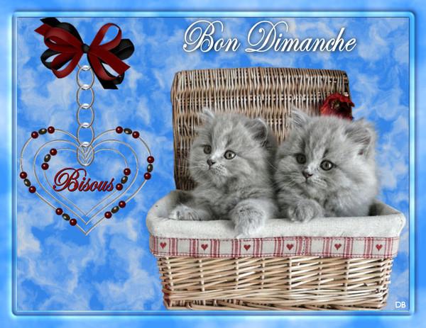 """Résultat de recherche d'images pour """"images bon dimanche chats bisous"""""""