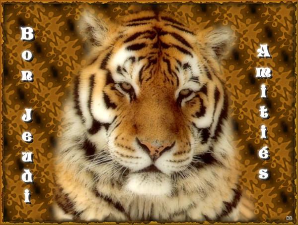 Bon Jeudi-Amitiés-tigre : kdo pour vous