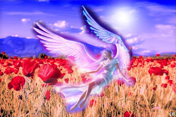 L'Ange de la Nature : kdo pour vous