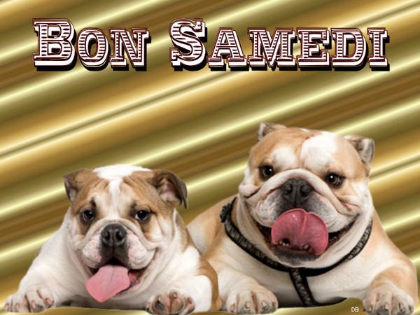 Bon samedi - bulldogs : kdo pour vous