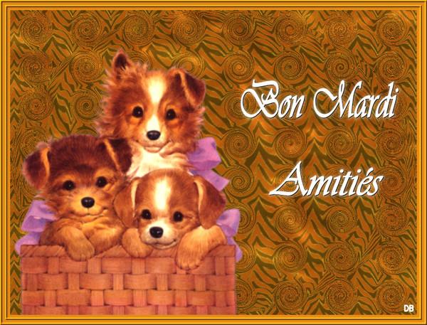 Bon mardi-amities-chiots : kdo pour vous