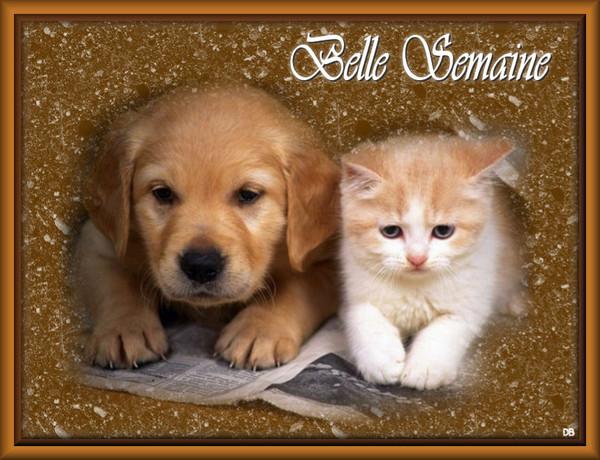 Belle Semaine - chaton - chiot : kdo pour vous