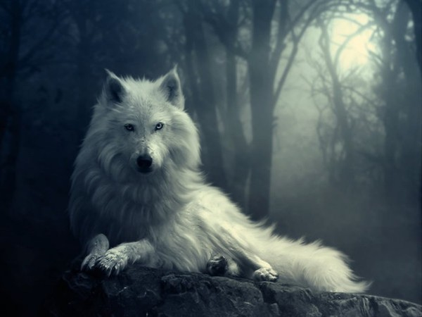 wallpaper loup fond - photo #44