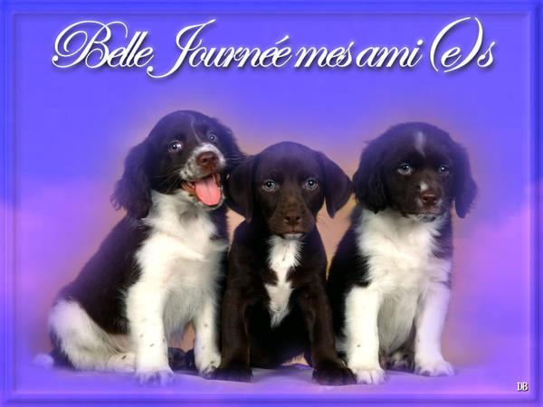 Belle Journée mes ami(e)s : kdo pour vous