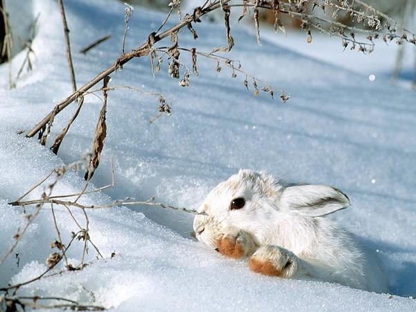 Lapereau wallpaper fond d 39 cran photo paysage d 39 hiver for Fond ecran hiver animaux