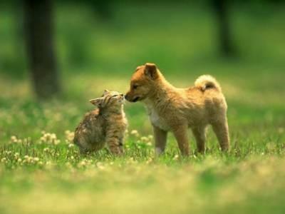 Chien et chat mignons