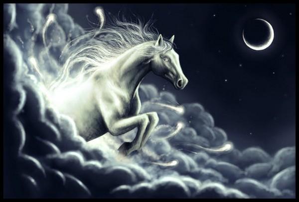 photo cheval feerique