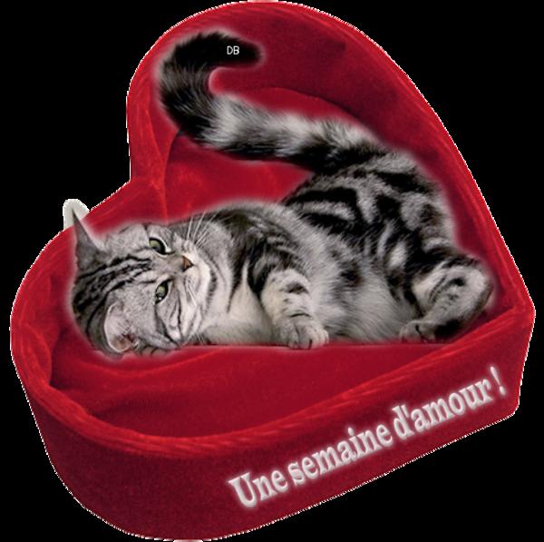 """""""Une semaine d'amour"""" chat dans un coussin en coeur : kdo"""