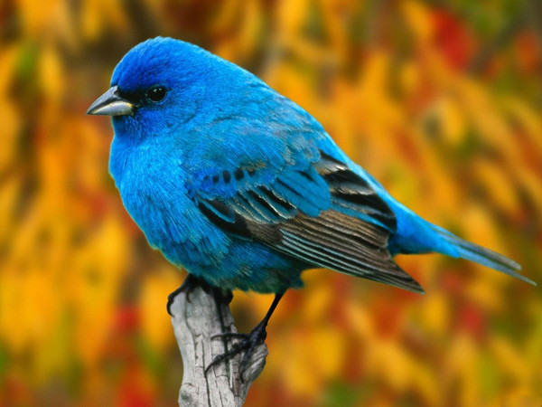 oiseaux wallpaper fond d 39 cran photo image fond oiseau du paradis animal. Black Bedroom Furniture Sets. Home Design Ideas