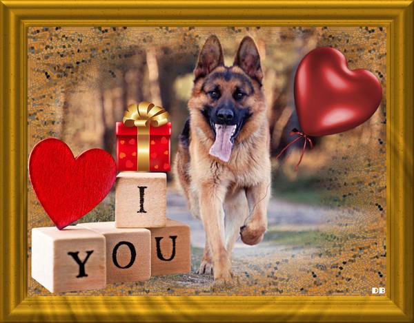 I love you - chien - St-Valentin : kdo pour vous