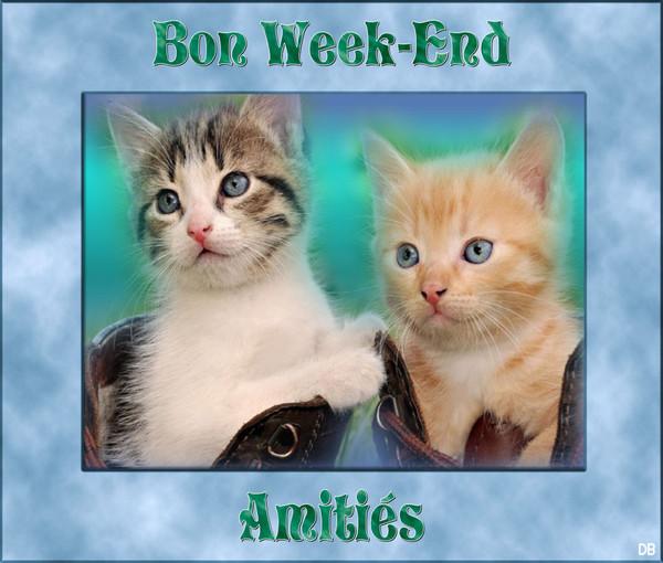 Bon Week-End - Amitiés - Chatons : kdo pour vous