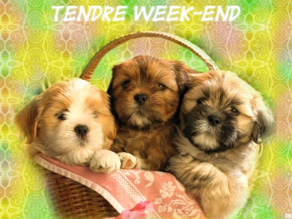 Tendre week-end : kdo pour vous
