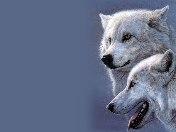 wallpaper loup fond-#19