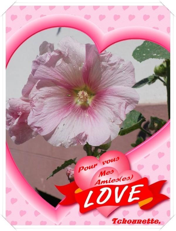 Love coeur kdo de ma domie d 39 amour - Photo de coeur d amour ...