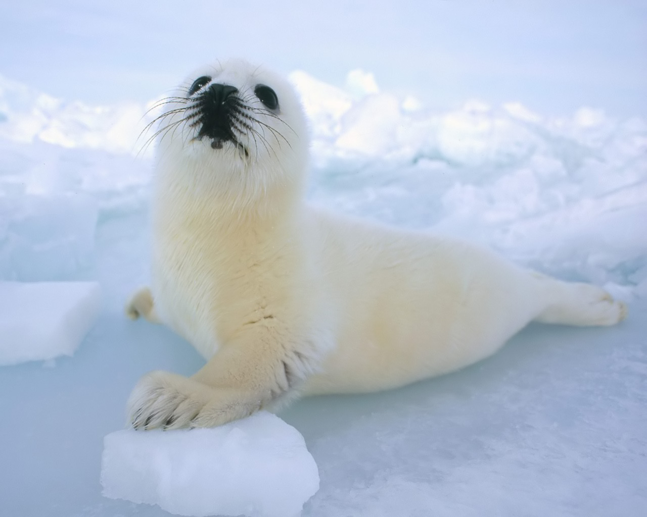 Wallpapers animaux marins page 2 - Animaux wallpaper ...