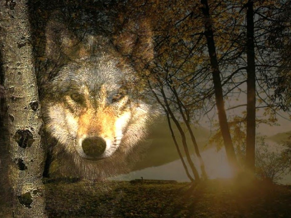 wallpaper loup fond - photo #6