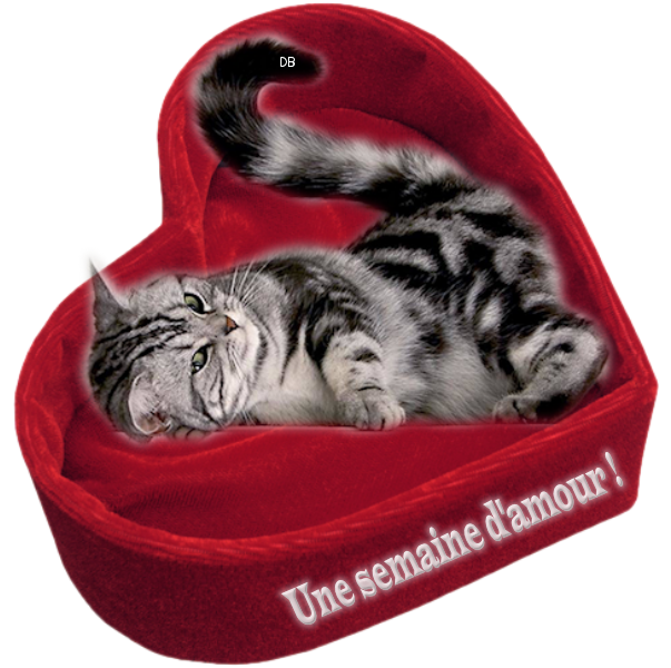 chat amour com Alfortville