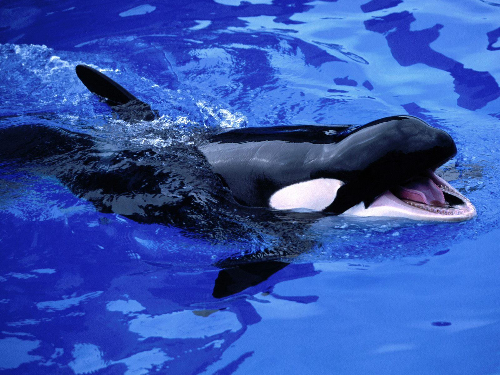 Wallpapers animaux marins page 9 - Wallpaper animaux ...