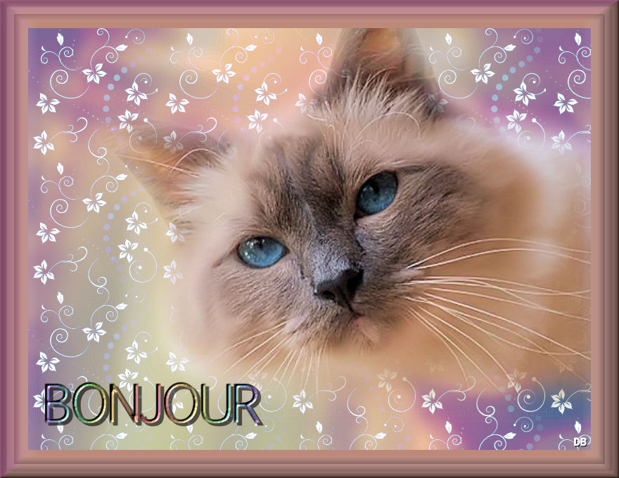Topic des chats - Page 23 F02a440a